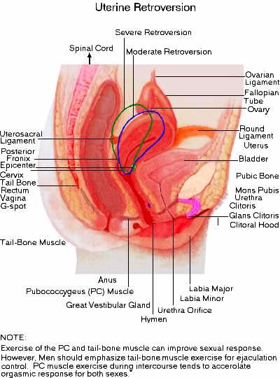 Tilted uterus info helpful positions orgasm